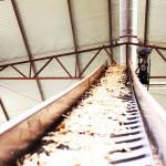 Esteira de resíduos para a caldeira - Qualiplás Compensados Plastificados